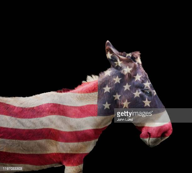 democratic party donkey - partisan politics stock pictures, royalty-free photos & images