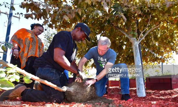 Democratic party presidential hopeful Tom Steyer joins Ron Finley Gangsta Gardener for the Urban Community in planting a peach tree in the community...