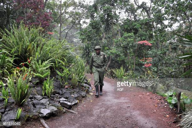 Democratic Republic of Congo, Virunga National Park.