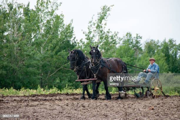 Demonstration of crop planting at Ukranian Village Alberta
