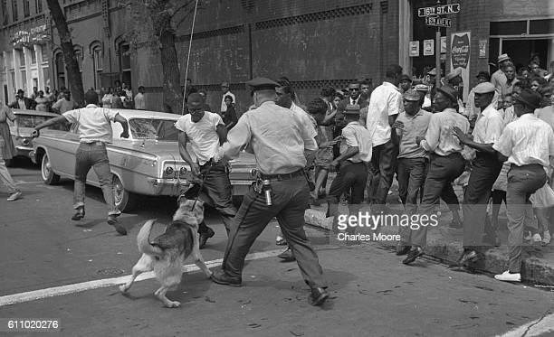 Demonstrator tries to wrestle his shirt away from a police dog held by an officer with a billy club, Birmingham, Alabama, May 3, 1963. Police...