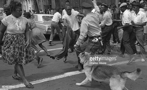 Demonstrator waves his shirt at a police dog held by an officer with a raised billy club, Birmingham, Alabama, May 3, 1963. Police officers used both...