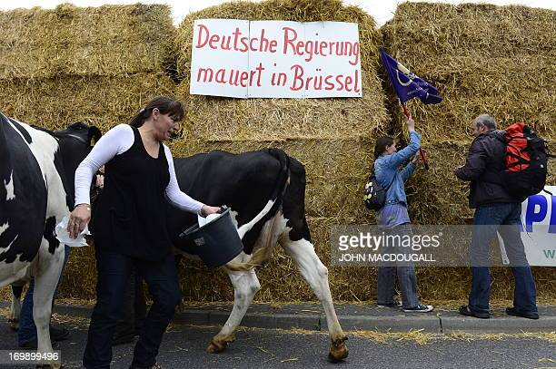 Demonstrators and cows stand in front of bales of straw are piled up in front of the Chancellery during a protest of dairy farmers on June 4 2013 in...