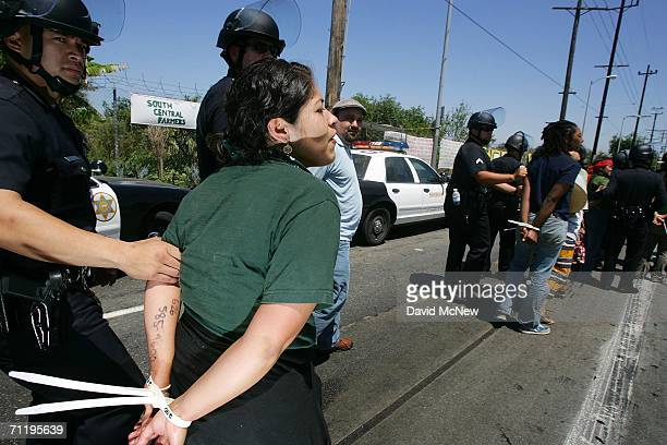 Demonstrators are arrested by Los Angeles County Sheriffs deputies as they protest the forced eviction of the small urban farmers of the South...