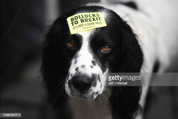 Demonstrator's dog is seen on the March For The Many on September 23 2018 in Liverpool England The March For The Many is calling for a people's vote...