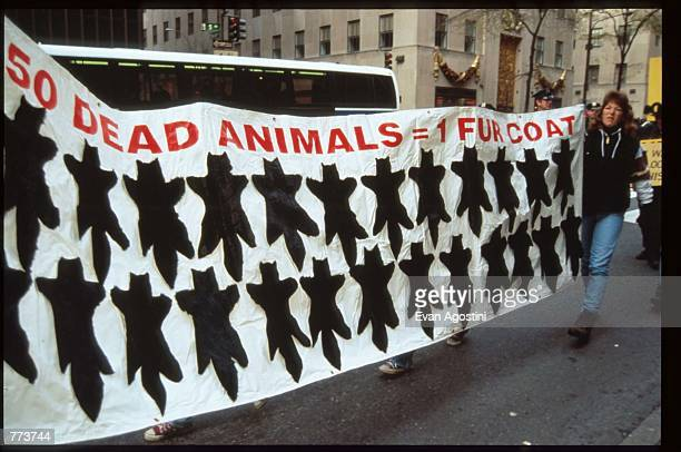 Demonstrators hold up a sign at an antifur rally November 24 1995 in New York City People for the Ethical Treatment of Animals hold an annual antifur...