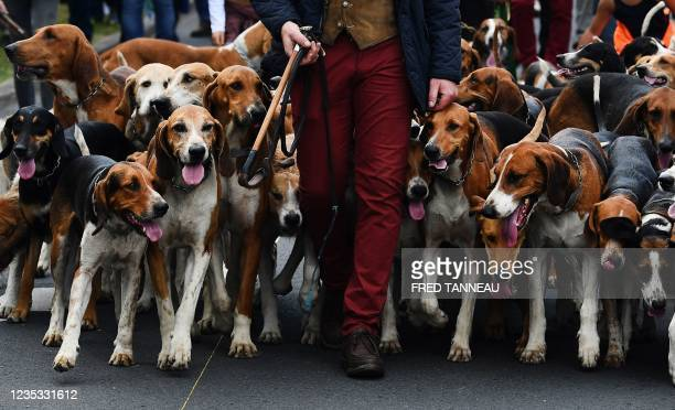 Demonstrators with hunting dogs for hounds participate in a protest to defend hunting and rural life in Redon, western France, on September 18, 2021.
