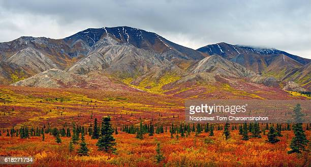 Denali in Autumn, Alaska, USA