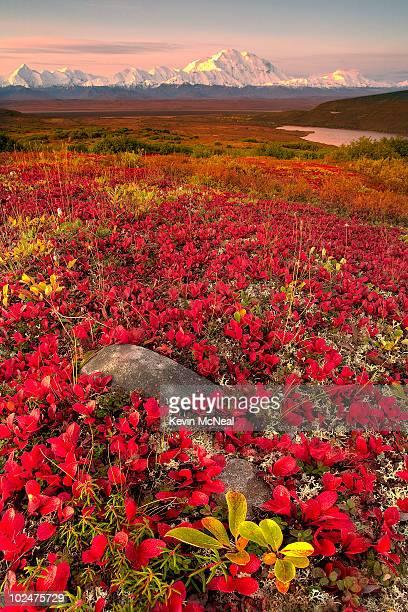 Denali National Park Fall Colors