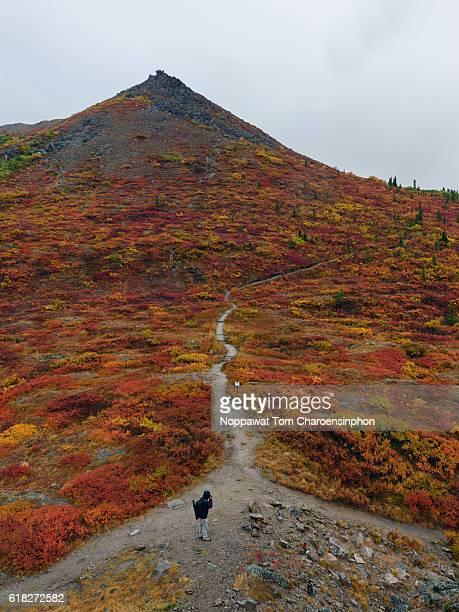 Denali National Park in Fall Season, Alaska, USA