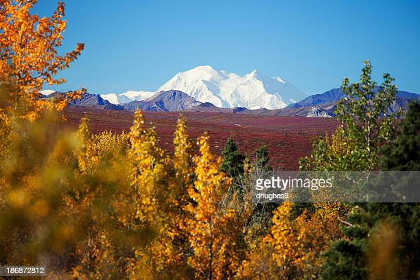 Denali National Parks Mt. McKinley, framed by autumn colored trees