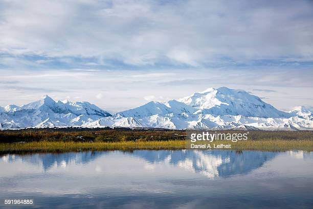 denali reflection in tundra pond - mt mckinley stock photos and pictures
