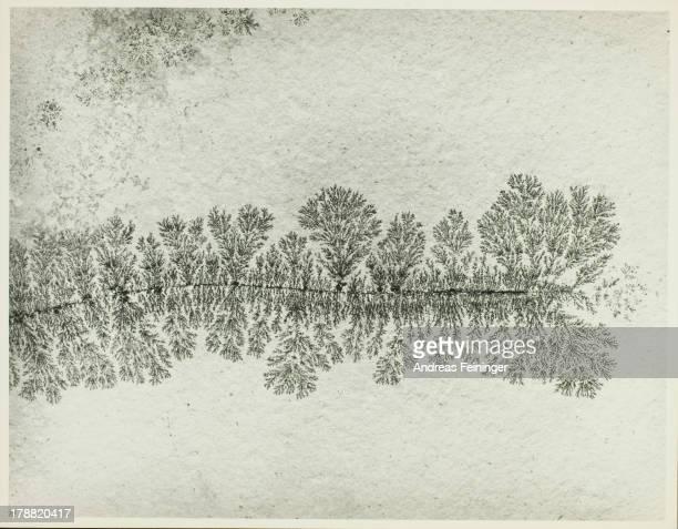 Dendrite - an arborescent crystalline growth, 1976.
