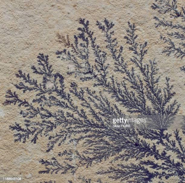 Dendrites de pyrolusite aux formes végétales de Solenhoven en Bavière, Autriche, circa 1980.