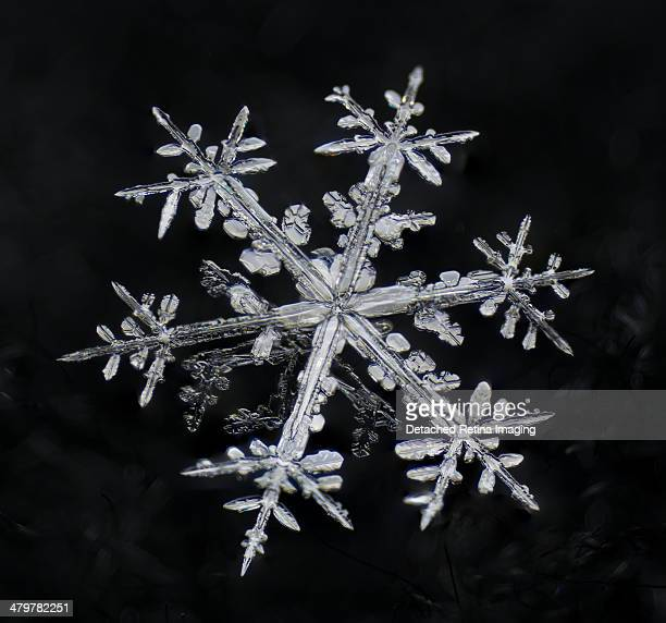 dendritic snowflake macro - snowflakes stock photos and pictures