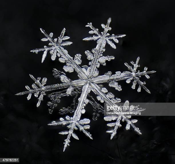 Dendritic Snowflake Macro