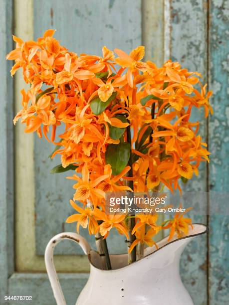 Dendrobium nobile Firebird orchid in a white vase