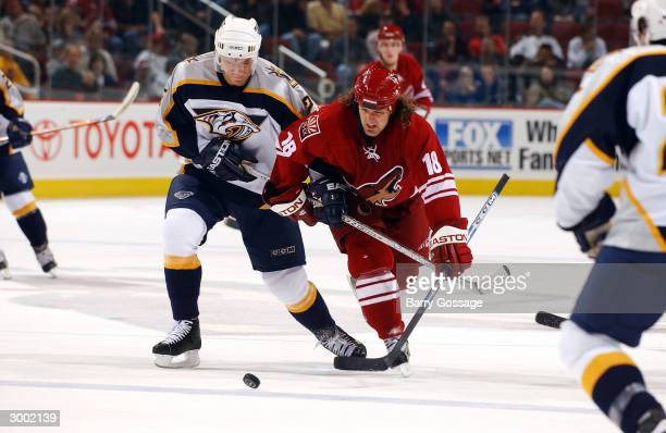 Denis Arkhipov of the Nashville Predators battles for the puck with Tyson Nash of the Phoenix Coyotes on February 21 2004 at Glendale Arena in...