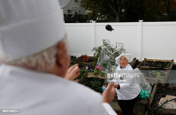 Denise Graffeo throws an eggplant she just picked to her husband Anthony as they prepare to make eggplant parmesan at their home in Saugus MA on Oct...