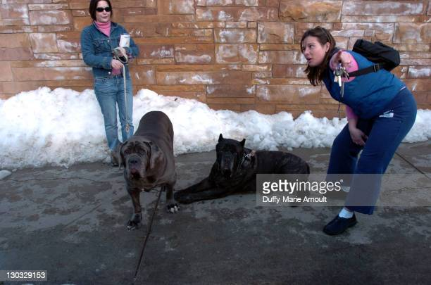 Denise Martell walking Donna and Danielle Martell with Maximus on Park Avenue on the first day of the Sundance Film Festival