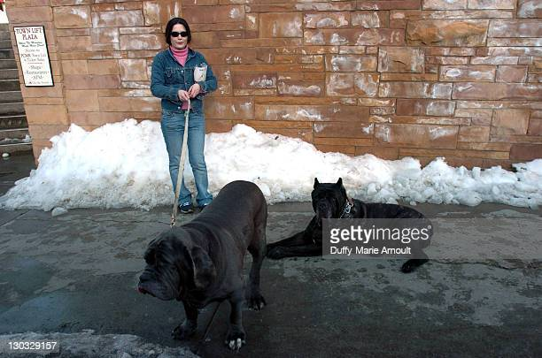 Denise Martell with Donna and Maximus her Neopolitan Mastiffs on Park Avenue on the first day of the Sundance Film Festival