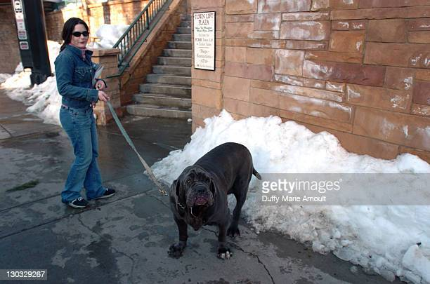 Denise Martell with Donna her Neopolitan Mastiff on Park Avenue on the first day of the Sundance Film Festival