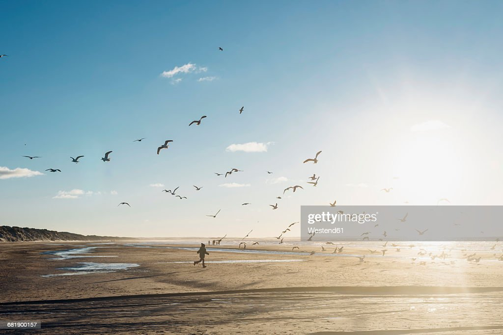 Denmark, Blokhus, boy chasing flock of seagulls on the beach : Stock-Foto