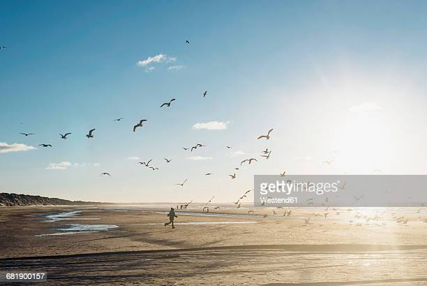 denmark, blokhus, boy chasing flock of seagulls on the beach - bird stock photos and pictures