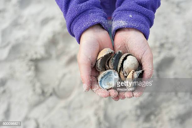 Denmark, Jutland, Vejers, hands with mussels