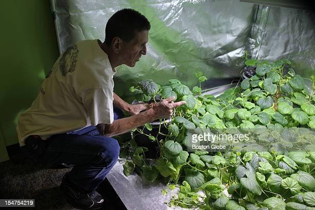 Dennis Sargent at his hydroponic store Dennis was next to a grow tent that had cucumbers growing inside
