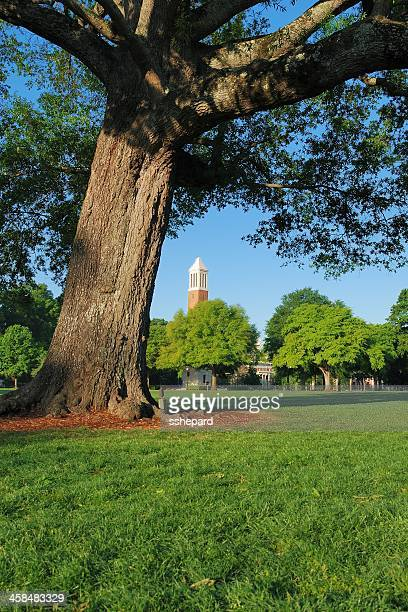 denny chimes behind leaning tree - tuscaloosa stock pictures, royalty-free photos & images