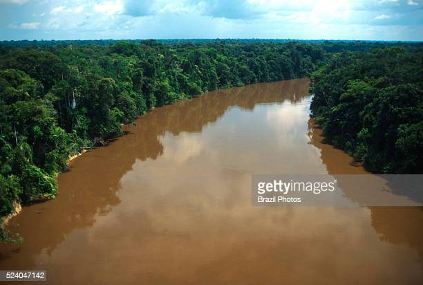 Dense and intact forest along Urucu river banks in Amazonas State Amazon rainforest Brazil