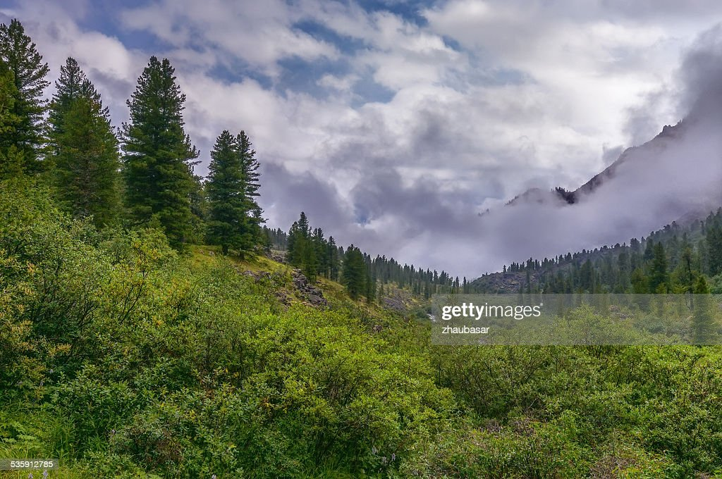 Dense bushland in a mountain valley : Stock Photo