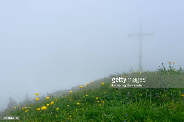 Dense fog, Hirschberg summit, foothills of the Alps, Upper Bavaria, Bavaria, Germany