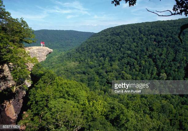 dense forest in ozark mountains - arkansas stock pictures, royalty-free photos & images