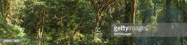 Dichten Dschungel-Pflanzen grünen Wald Wildnis panorama