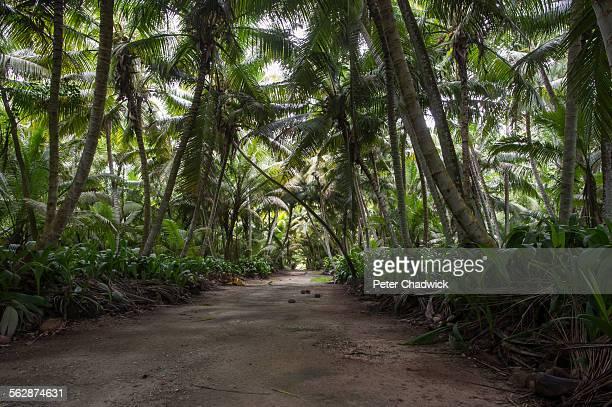 Dense overgrown coconut plantations, DArros Island and St Joseph Atoll, Amirantees, Seychelles,