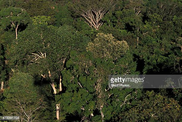 Dense tropical forest canopy trees aerial view of Amazon rain forest at Alta Floresta Mato Grosso State Brazil