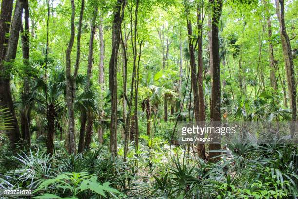 dense tropical forest scene - humid stock pictures, royalty-free photos & images