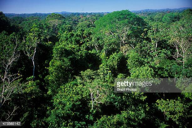 Dense tropical forest view from canopy trees level of Amazon rain forest at Alta Floresta Mato Grosso State Brazil