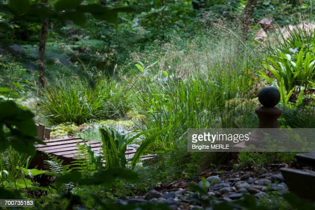 Dense undergrowth garden with walkway, great wood-rush, ferns and butterburs