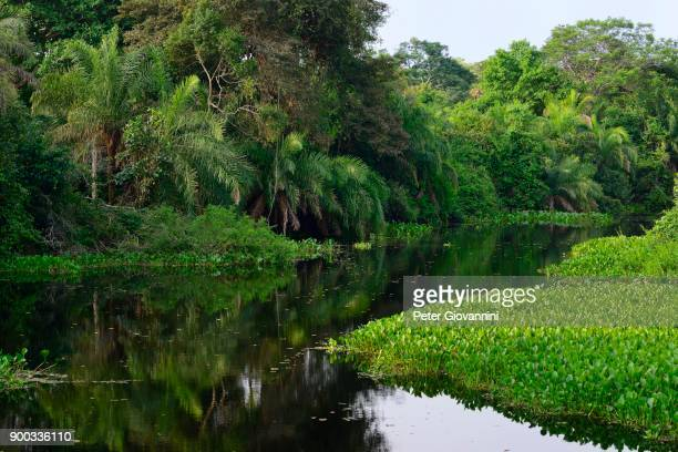 Dense vegetation on shore, Rio Miranda, southern Pantanal, Matto Grosso do Sul, Brazil