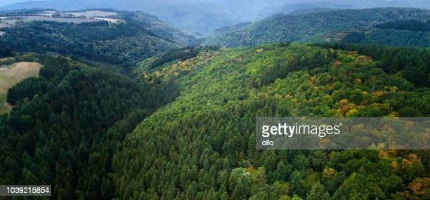 Dichte Wälder - Awrial anzeigen