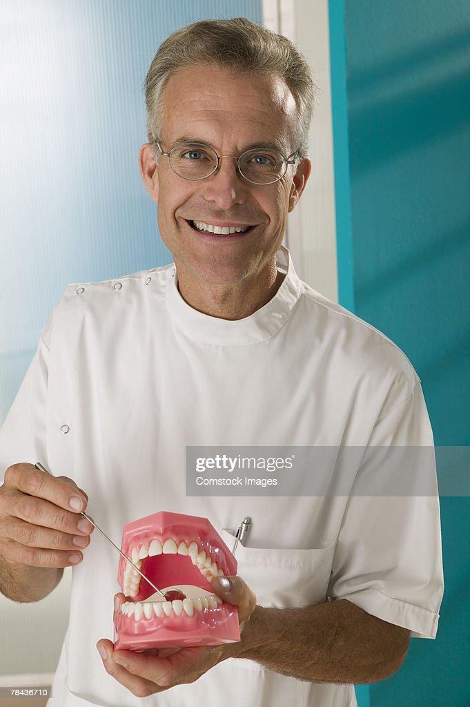 Dentist demonstrating model teeth : Foto de stock