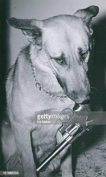JUN 8 1960 6221960 Denver Colorado Police Department Canine Corps