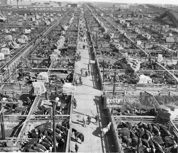 Denver News I 25: 1949, OCT 24 1949, 10-25-1949; Denver Union Stockyards