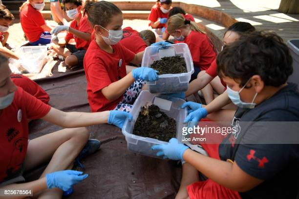 Denver Zoos Summer Safari campers 6th8th grade trade poop as they sort dung beetles from bison poop patties to assist with Zoos conservation research...