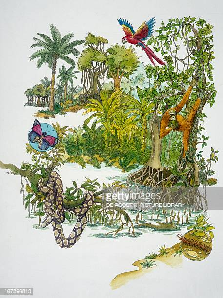 Depiction of the rainforest. Drawing.