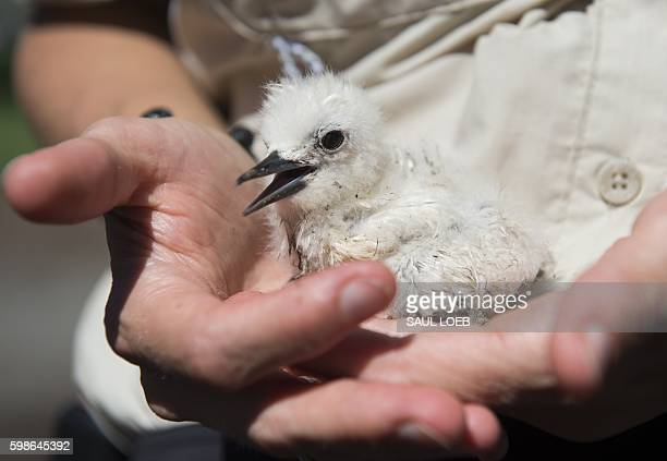 Deputy Assistant Regional Director at the US Fish and Wildlife Service Miel Corbett holds a White Tern bird during a tour by US President Barack...