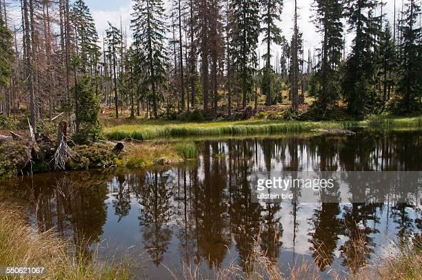 Der künstlich angelegte Stausee Hirschbachschwelle nache der Ortschaft Buchenau im Nationalpark Bayerischer Wald ist eine historische Anlage für die...